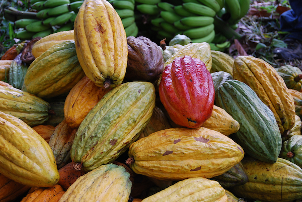 Revealing The Magic of Chocolate - Part III: Cacao & Biodiversity
