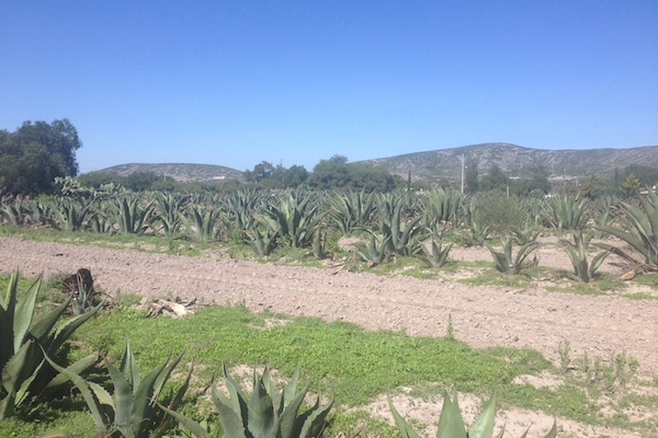 The Agave Growers of Ixmiquilpan - Education & Opportunities [Part 2 of 3]