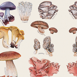 Plants-based Medicine | We're all about the Mushrooms