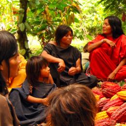 Ashaninka Cacao Project