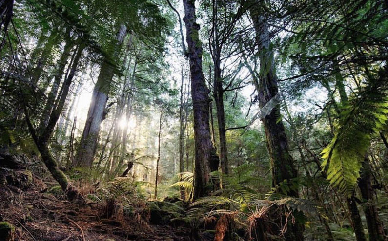 Friends of Loving Earth: Sarah Rees from the Great Forest National Park